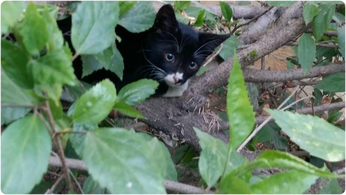 leafcat